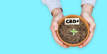 Is CBD Legal Worldwide? Cannabidiol's Legal Status