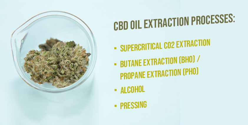 CBD Oil Extraction Processes