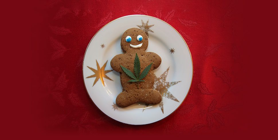 CBD Gingerbread
